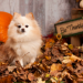Thumbnail for Thanksgiving Safety Tips for Pets